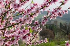 spring_primavera_toscana