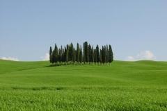 tuscany_spring_Campagna_toscana_cipressi